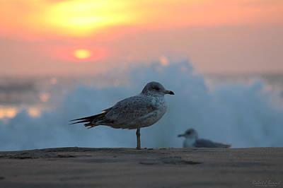 Seagull Seascape Sunrise Poster