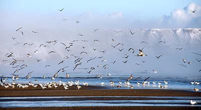 Seagulls I Poster by Svetlana Sewell