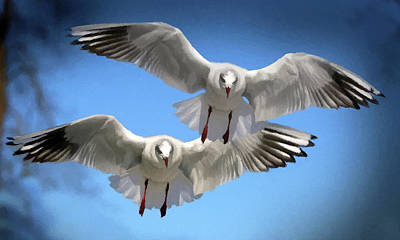 Poster featuring the photograph Seagulls In Flight  by David Dehner