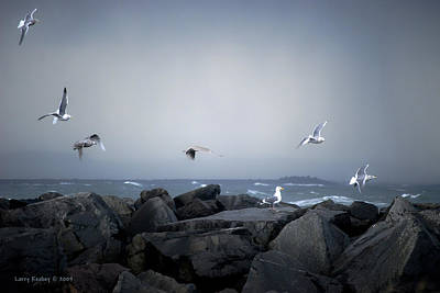 Poster featuring the photograph Seagulls In Flight by Larry Keahey