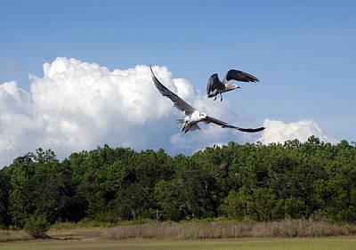 Seagulls Over Marsh Poster by Susanne Van Hulst