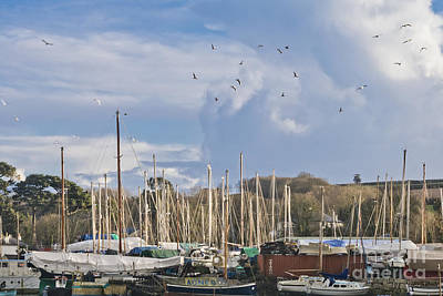 Seagulls Over Mylor Creek Boatyard Poster by Terri Waters