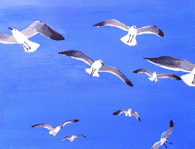 Seagulls Overhead Poster by Anne Marie Brown