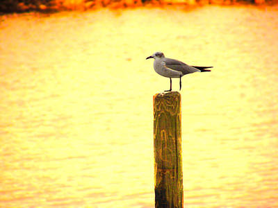 Seagulls Sunset Poster