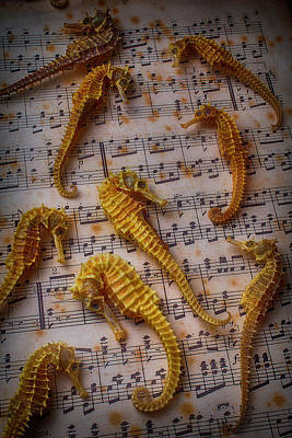 Seahorses On Sheet Music Poster by Garry Gay