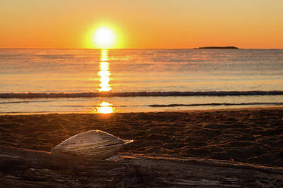 Poster featuring the photograph Seashell Sunrise by Kirkodd Photography Of New England