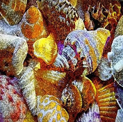 Seashells Galore Poster