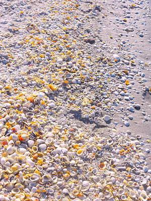 Seashells In Sanibel Island, Florida Poster