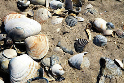 Poster featuring the photograph Seashells by John Rizzuto