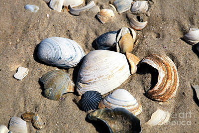 Poster featuring the photograph Seashells On The Beach by John Rizzuto