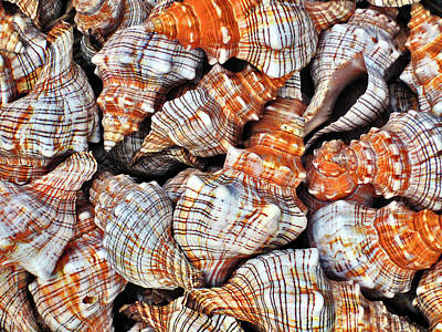 Seashells. Texture. Poster by Andy Za