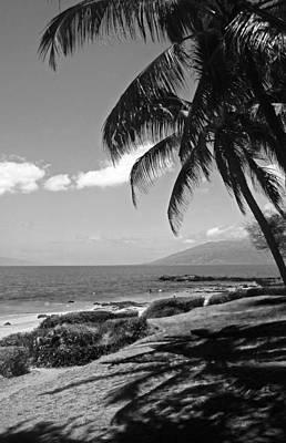 Seashore Palm Trees Poster