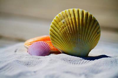 Seashore Shells Poster by Mountain Dreams