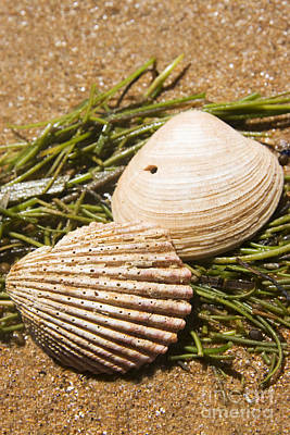 Seaside Seashells Poster