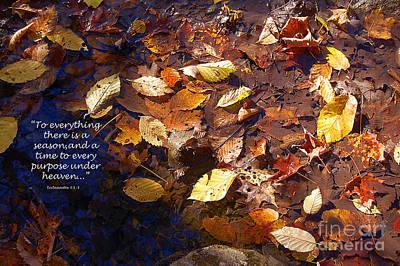 Seasons Poster by Diane E Berry