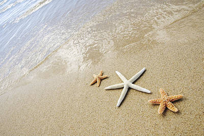 Seastars On Beach Poster by Mary Van de Ven - Printscapes