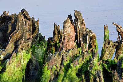 Seaweed-covered Beach Stump Mountain Range Poster by Bruce Gourley
