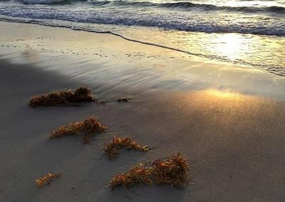 Seaweed Glow Poster