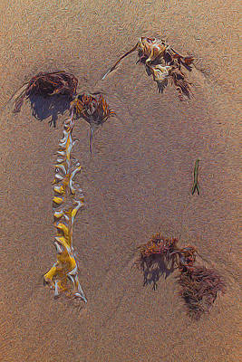 Seaweed On Clayhead Beach Poster by Todd Breitling