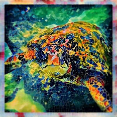 Sebastian The Turtle Poster by Erika Swartzkopf