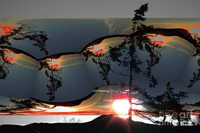 Sechelt Tree 12 Poster by Elaine Hunter