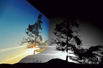 Sechelt Tree Poster by Elaine Hunter