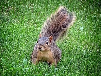 Secret Squirrel Poster
