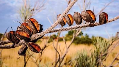 Seeds Of The Desert - Central Australia #2 Poster