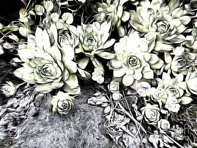 Poster featuring the photograph Sempervivum - Ebony And Ivory  by Janine Riley