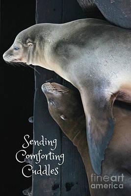 Sending Comforting Cuddles Poster