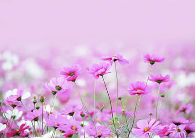 Sensual Spring Meadow Poster