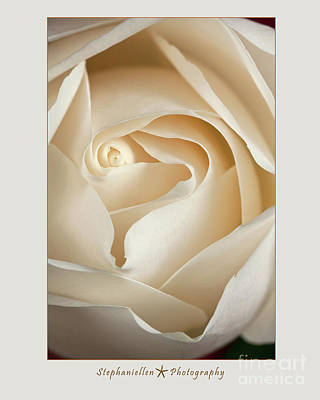 Sensual White Rose Poster by Stephanie Hayes