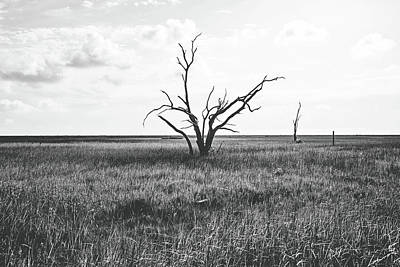 Sentinel Of The Marsh - Bw Poster
