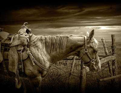 Sepia Tone Of Back At The Ranch Saddle Horse Poster by Randall Nyhof