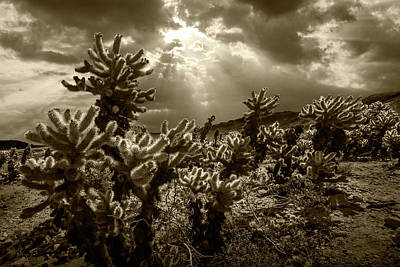 Poster featuring the photograph Sepia Tone Of Cholla Cactus Garden Bathed In Sunlight by Randall Nyhof