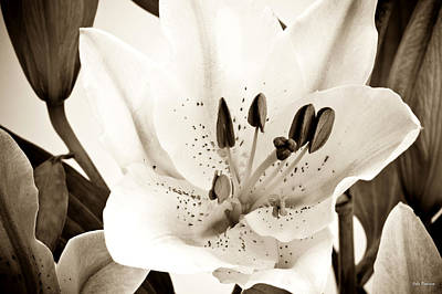 Sepia Toned Asian Lily Poster by John Pagliuca