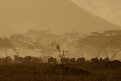 Serengeti Monsoon Poster
