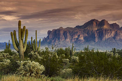 Serenity Of The Sonoran  Poster