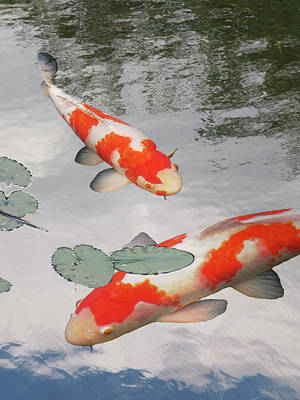 Serenity - Red And White Koi Poster by Gill Billington