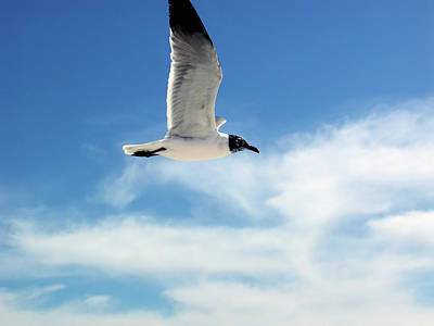 Poster featuring the photograph Serenity Seagull by Marie Hicks