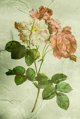 Shabby Chic Pink And White Peonies Poster