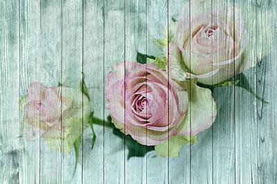 Shabby Chic Pink Roses On Blue Wood Poster