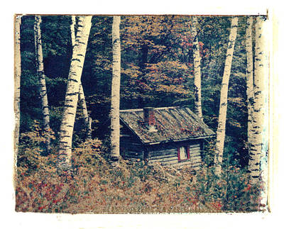 Shack And Birch Trees Poster