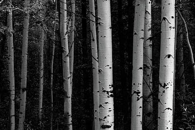 Poster featuring the photograph Shades Of A Forest by James BO Insogna