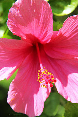 Shades Of Pink - Hibiscus Poster