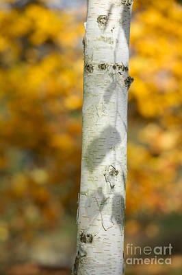 Shadows Of Autumn Poster