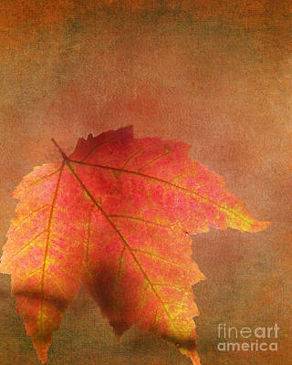 Shadows Over Maple Leaf Poster by Kathi Mirto