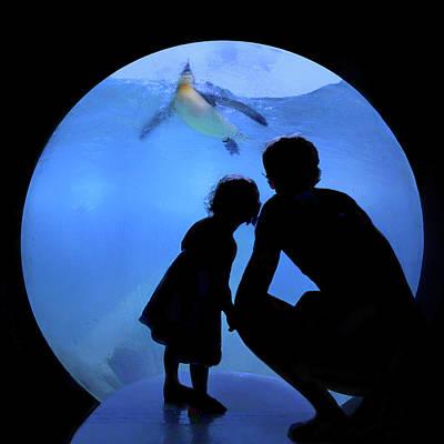 Sharing The Joy - Penguins - Aquarium Poster