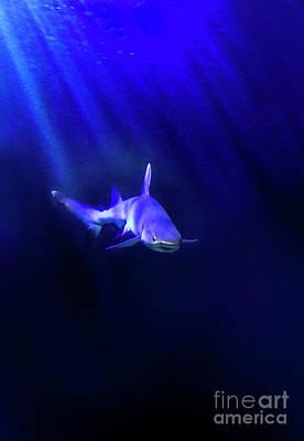 Poster featuring the photograph Shark by Jill Battaglia