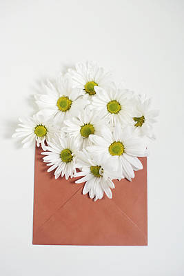Shasta Daisies In Orange Envelope Poster
